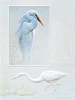 Solitary Egret (SY)