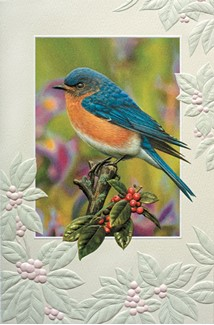 Berry Blue | Bluebird everyday greeting cards