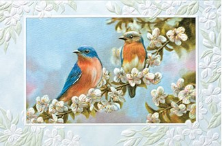 Bluebird couple songbird sympathy greeting cards m4hsunfo