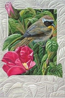 Common Yellowthroat | Songbird thank you greeting cards