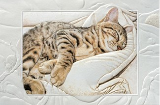 Bengal Baby | Cat embossed get well cards