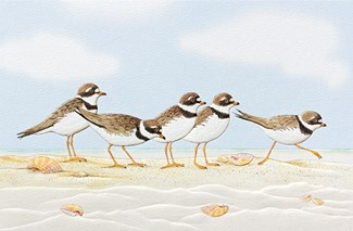 Playful Plovers | Shorebird greeting cards