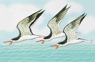 Black Skimmers | Embossed shorebird greeting cards