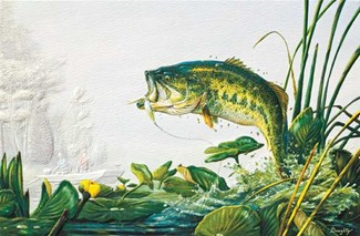 Bass Fishing | Fishing greeting cards