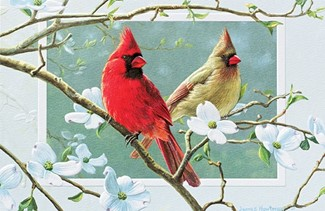 Cardinals in Dogwood | Inspirational anniversary greeting cards