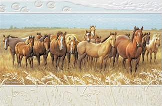 Curious | Horse embossed birthday greeting cards