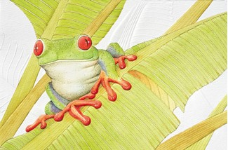 Red-Eyed Tree Frog | Frog greeting cards, Made in the USA