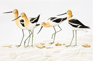 Avocets | Bird greeting cards, Made in the USA