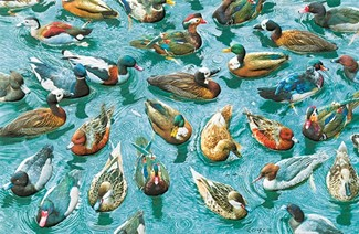 A Good Day for Ducks | Duck lover greeting cards