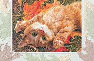 Carefree | Cat birthday cards