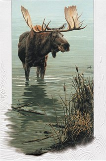 Silent Waters | Inspirational birthday moose greeting cards, Made in the USA