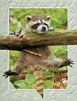 Hang in There | Raccoon inspirational note card