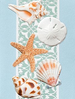 Serene Shells | Seashell get well greeting cards