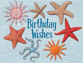 Stars of the Sea | Starfish birthday  note cards
