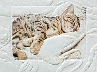 Bengal Baby | Cat embossed note cards