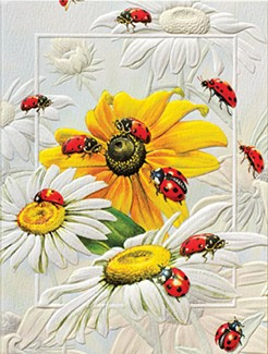 Lucky Ladies | Ladybug note cards