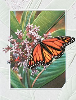 Monarch Butterfly | Embossed insect note cards