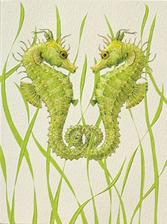 Seahorse Duo | Sealife blank greeting cards