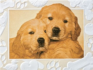 Good as Gold | Golden retriever embossed boxed note cards