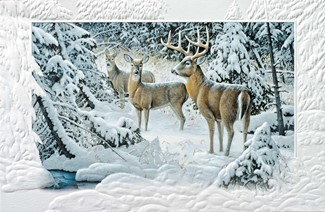 The Edge of Light | Deer themed boxed Christmas cards