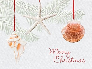 Ocean Ornaments | Embossed seashell greeting cards