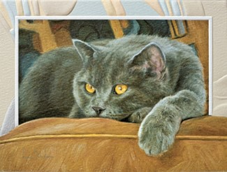 Comfortable | Cat lover note cards