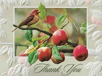 Appletime | Songbird note cards