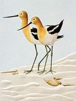 Avocets | Shorebird themed boxed note cards