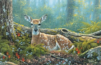 Endearing Fawn | Wildlife themed greeting cards
