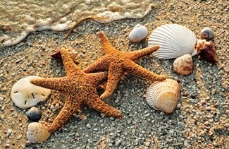 Starfish Pair | Beachy greeting cards