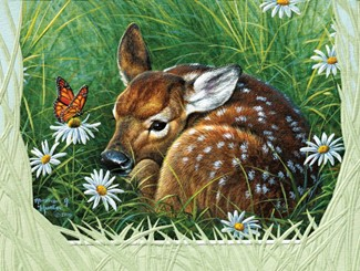 Tranquil Fawn | Inspirational sympathy cards