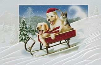 The Need for Speed | Pet themed boxed Christmas cards