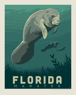 "Florida Manatee 8"" x 10"" Print 