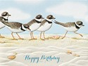 Plover Party