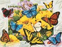 Butterfly Menagerie