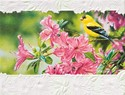 Goldfinch in Azaleas