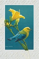 Prothonotary Warbler (CO)