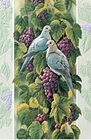 Mourning Doves in Vineyard (AWIN)