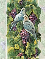 Mourning Doves (AWIN)