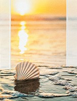 Sunset Shell (SY)