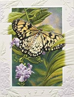 Rice Paper Butterfly (BKIN)
