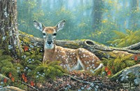 Endearing Fawn