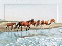 Ponies of Chincoteague (BDIN)