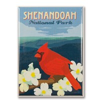 Shenandoah Cardinal on Dogwood Magnet